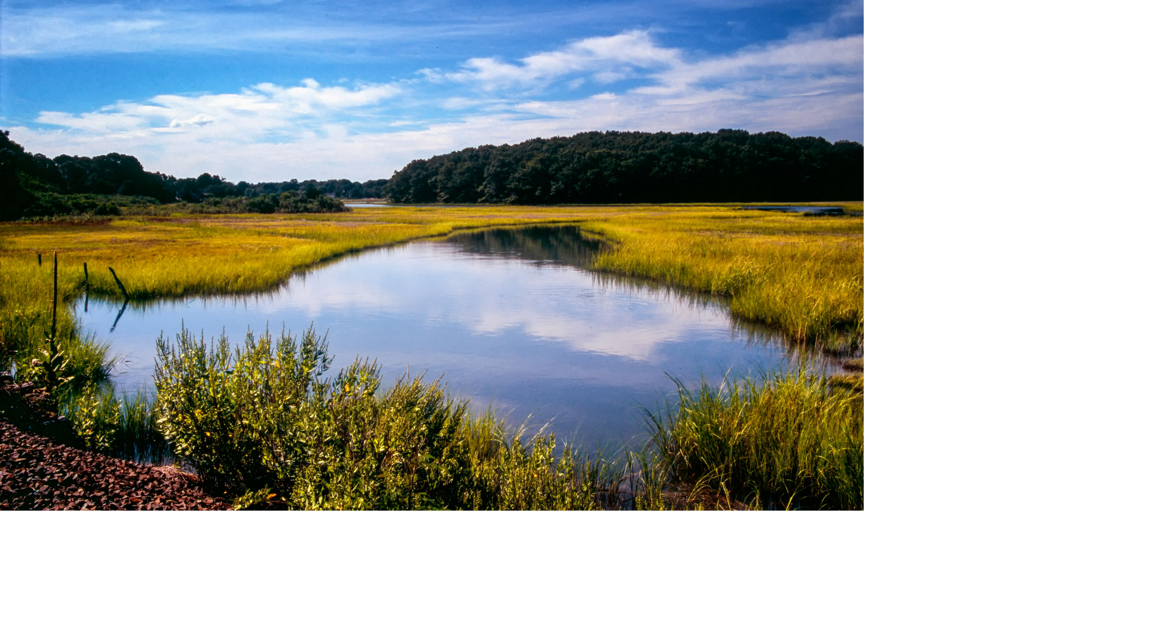 Looking out over a salt marsh with water and vegetation in view.