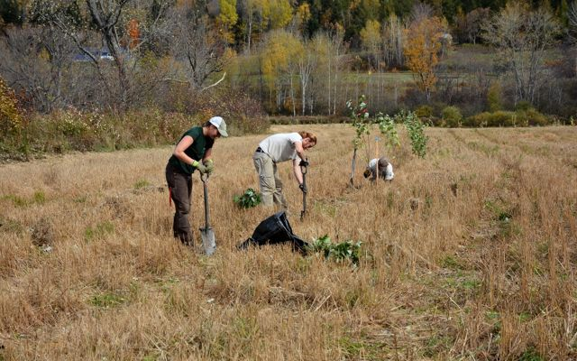 Workers plant trees on the Brunault property in Colebrook, NH.