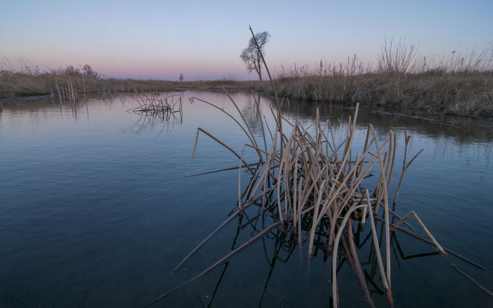 Brown grasses spot the surface of the Platte River as the dawn sky reflects pinks and yellow colors on its still shoreline.