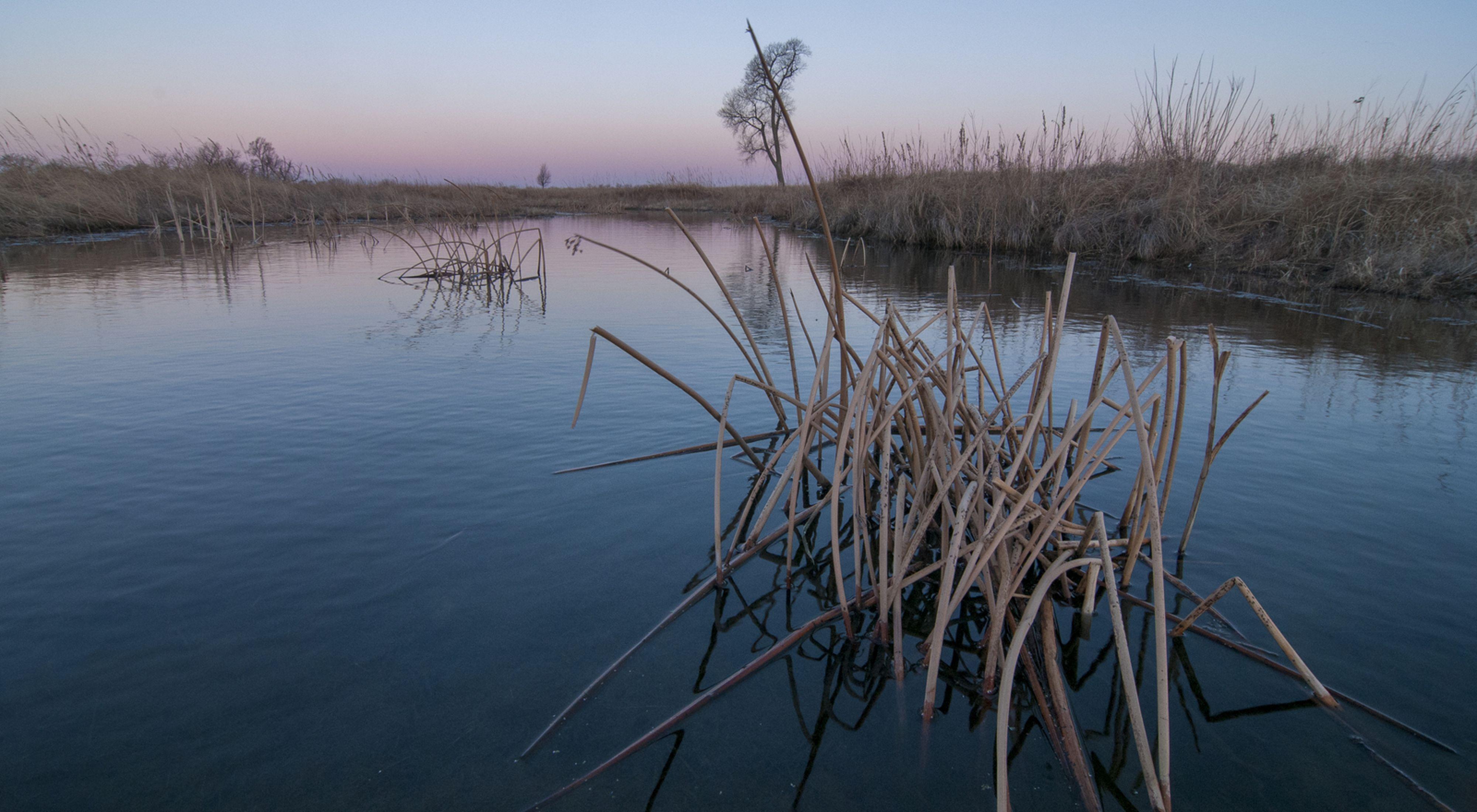 TNC's Derr wetland at sunrise.