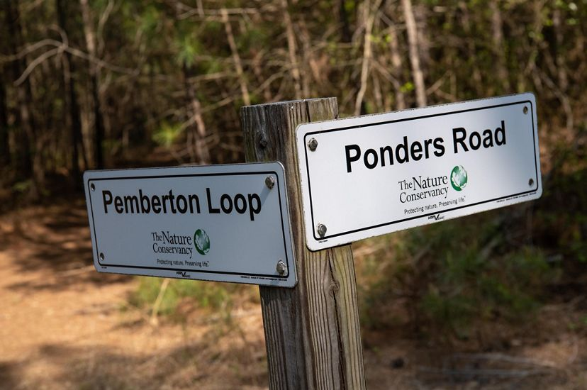 Two signs mark the way for trails at Ponders Tract Preserve. The sign pointing to the left reads, Pemberton Loop. The sign on the right reads Ponders Road.