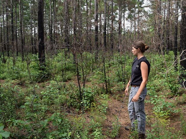 Natasha Whetzel visits the burn site four months after the prescribed burn. The immature loblolly pines were killed in the fire making room for more hardwoods.