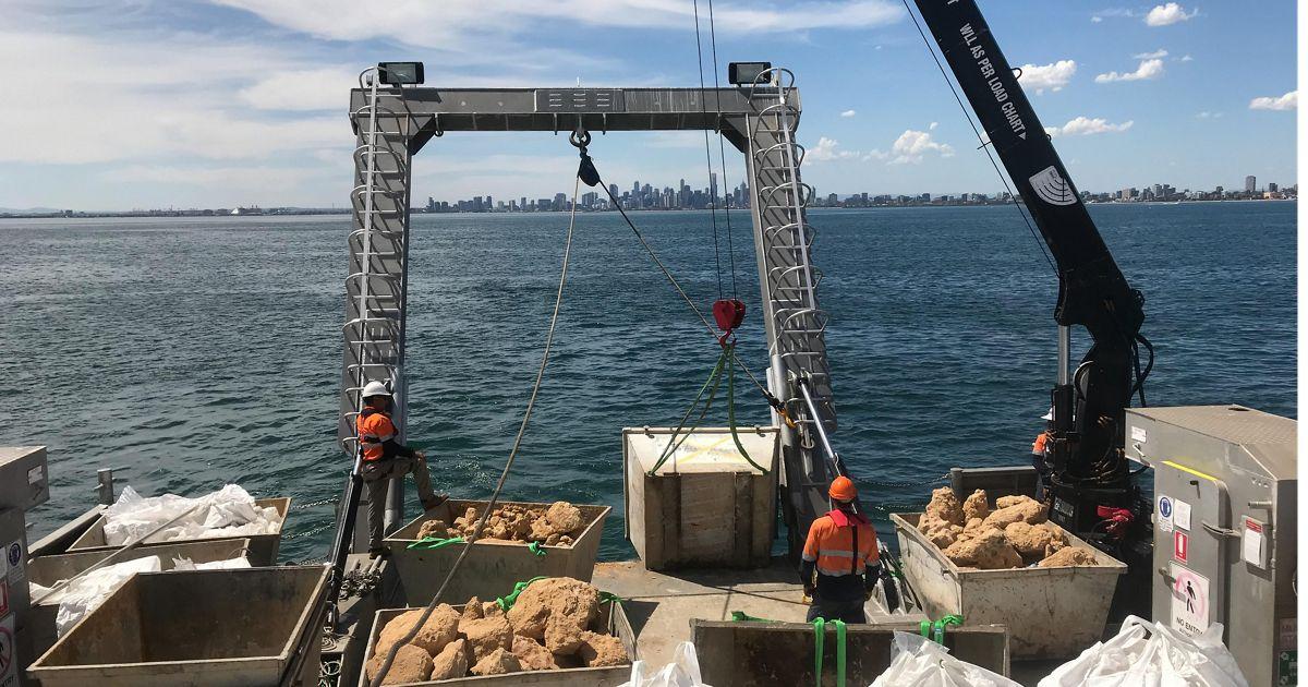 Building new shellfish reefs in Australia.