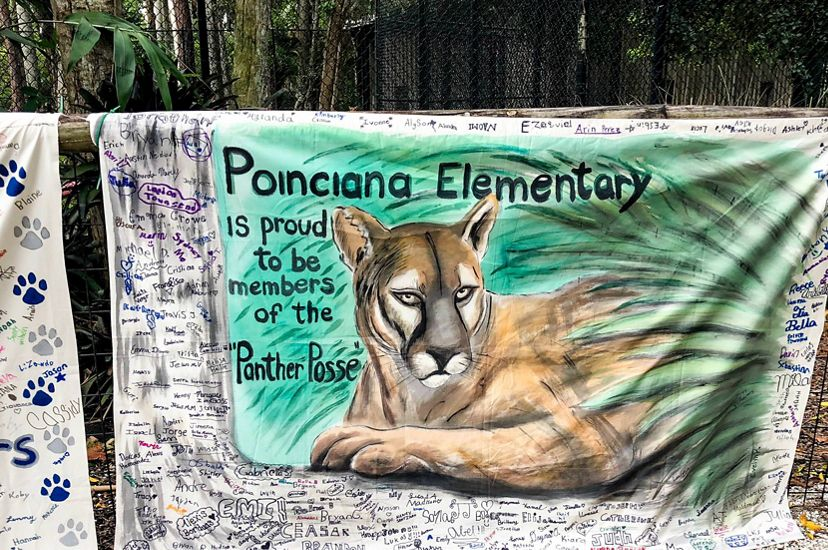 banner with image of a florida panther painted on it signed by elementary school students