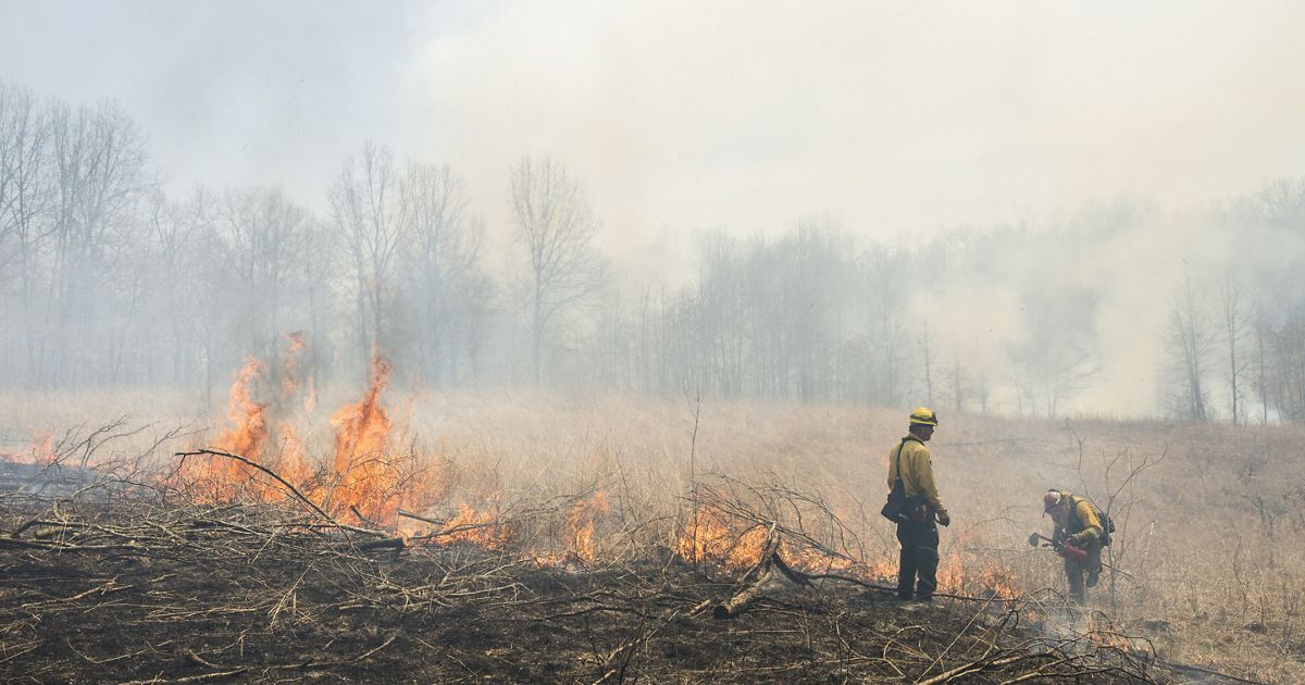 Smoke and fire dominate an open prairie, dominated by trees, where conservation professionals implement a burn.