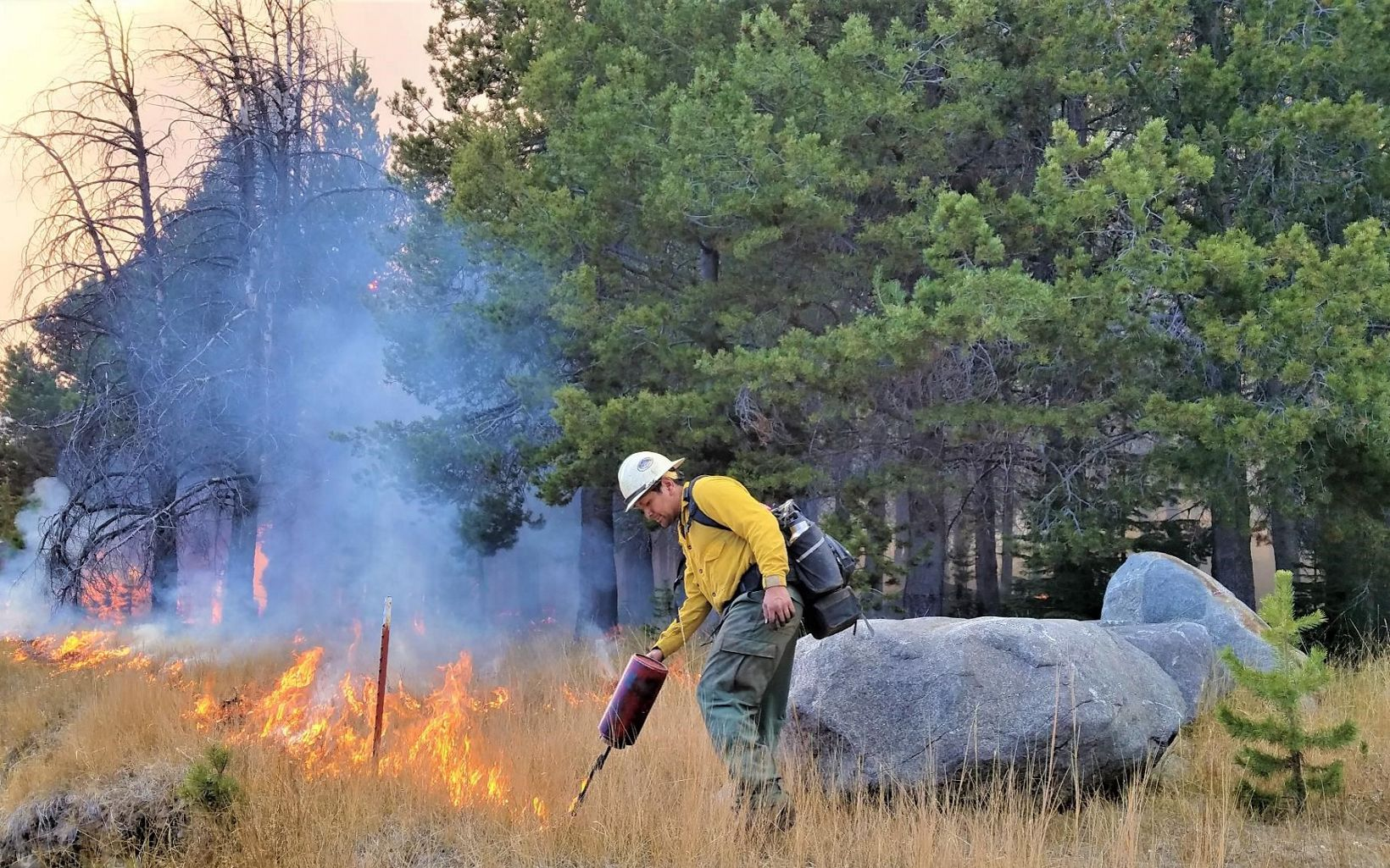 A worker in a hardhat and fire gear starts a fire in a grassy area using a drip torch.