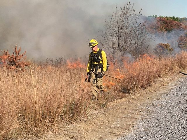 A fire crew member walks along tall grasses that are on fire.