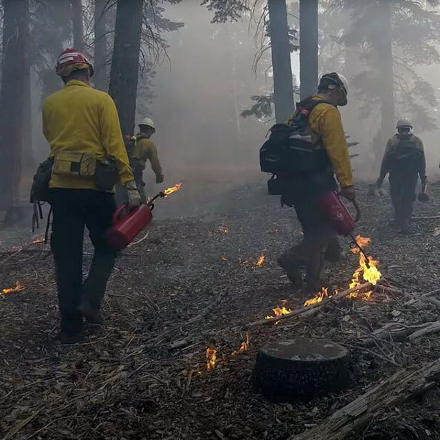 People in yellow and red fire gear walk through smoky forests setting prescribed burns.