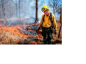 Applying fire with a drip torch