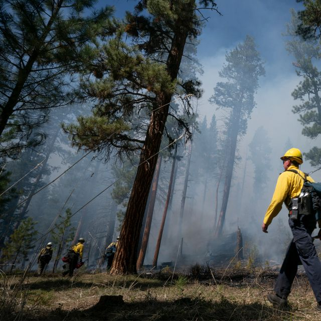 A man in a yellow jacket and helmet strolls through a smoky forest.