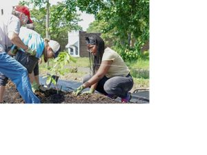 Volunteers plant trees in the urban orchard at Project Oasis.