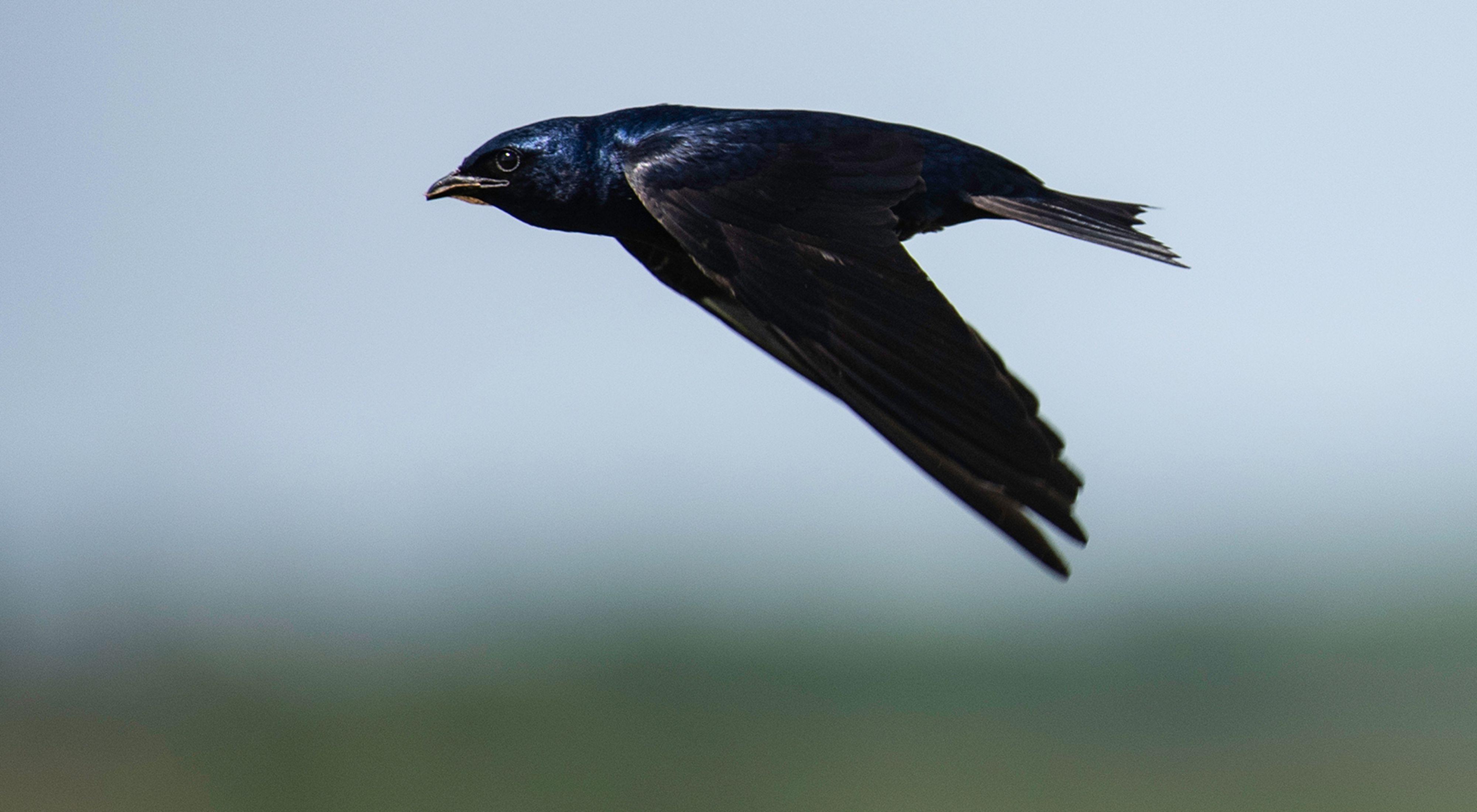 A bird flies through the air.