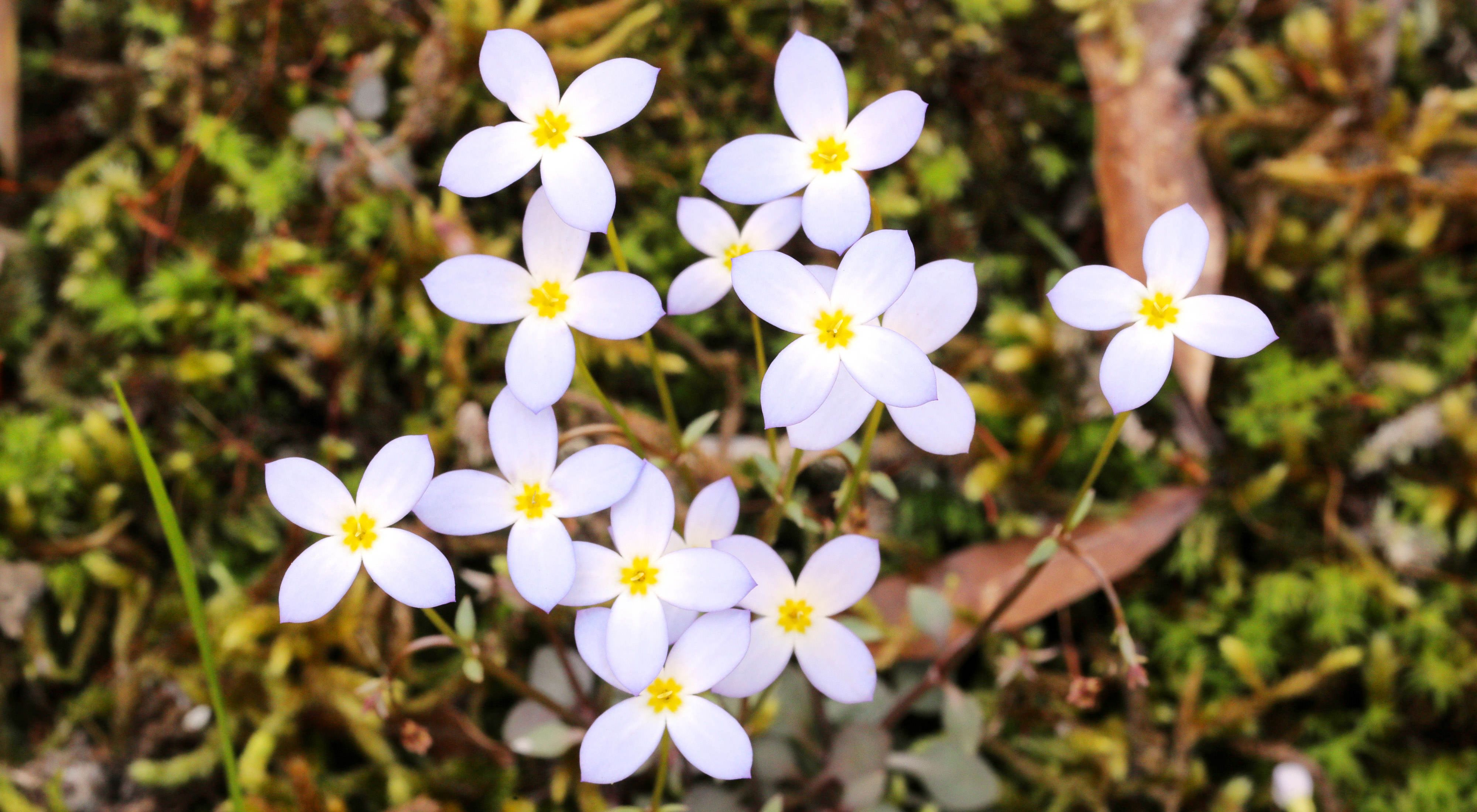 Wildflowers emerge from a forest floor.