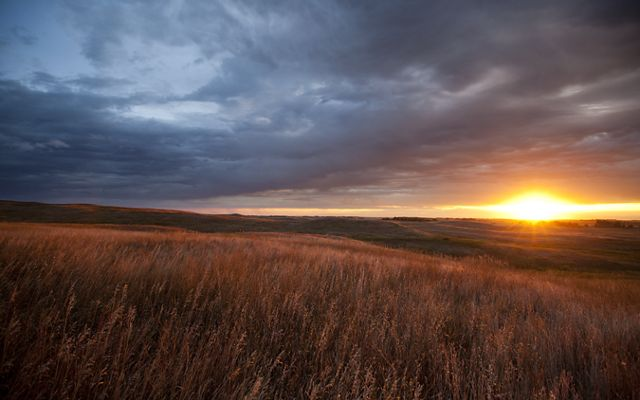 Tallgrass prairie is one of the most threatened, least protected habitat types in the world.