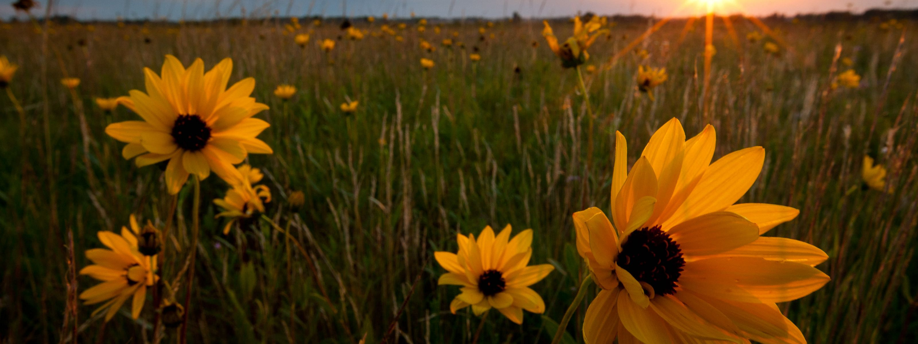 at TNC's Bluestem Prairie Preserve in Minnesota.