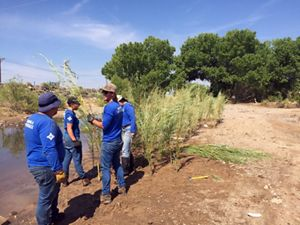 Rocky Mountain Youth Corps crews plant willows as part of the Albuquerque urban conservation arroyo restoration program.