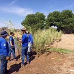 Volunteers in blue shirts plant native plants at an Albuquerque arroyo.