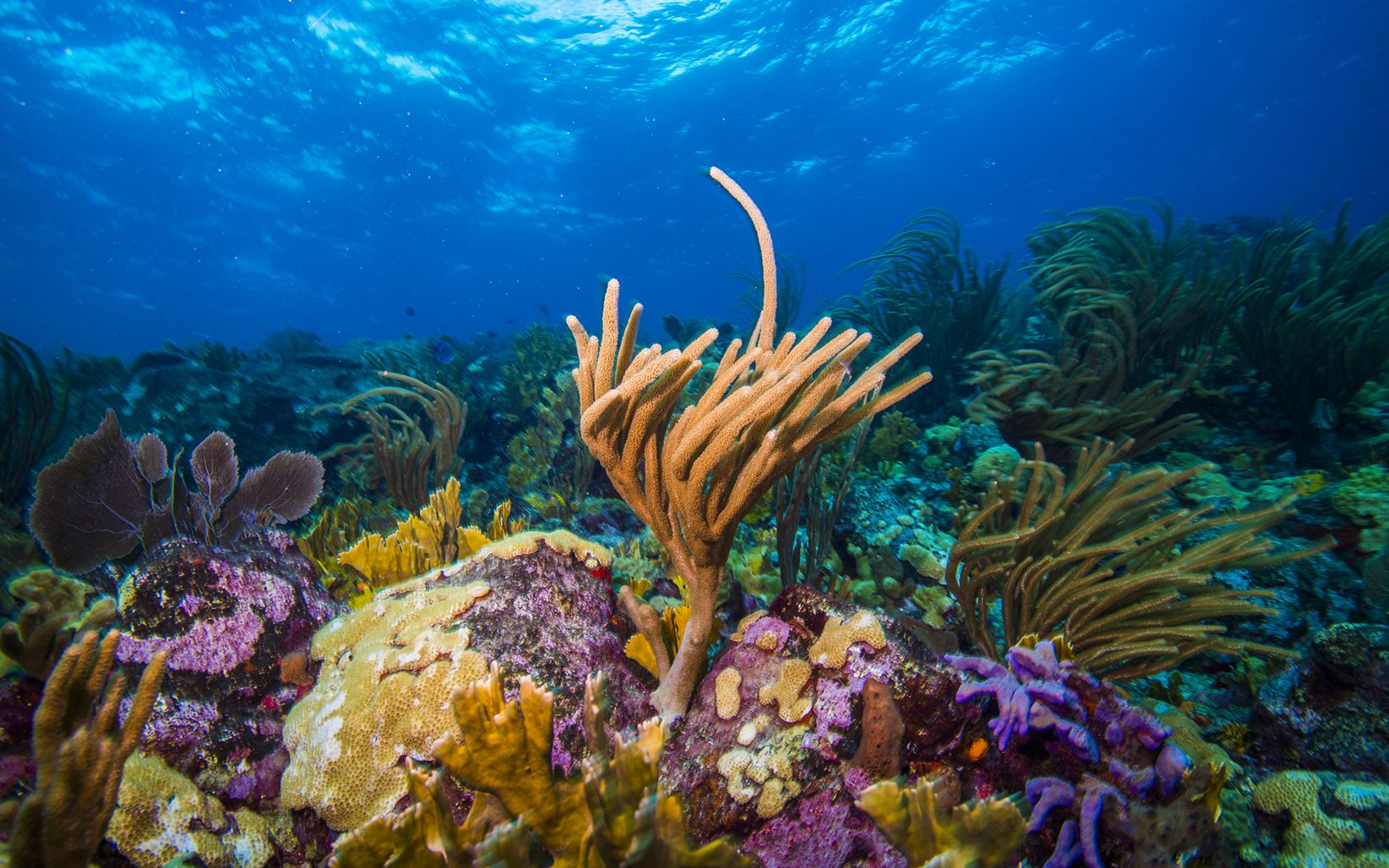 Coral Reefs in the Caribbean.