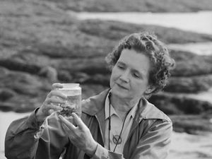 Biologist and author Rachel Carson stands seaside, examining specimen in a jar.