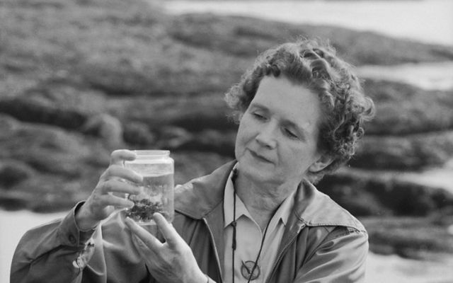 Black and white photo of biologist and author Rachel Carson by the shore, examining a specimen in a jar.