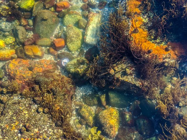 Looking down through water to a collection of sea creatures and plants in a shallow pool.