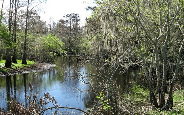 A stream runs past trees hanging with Spanish moss.
