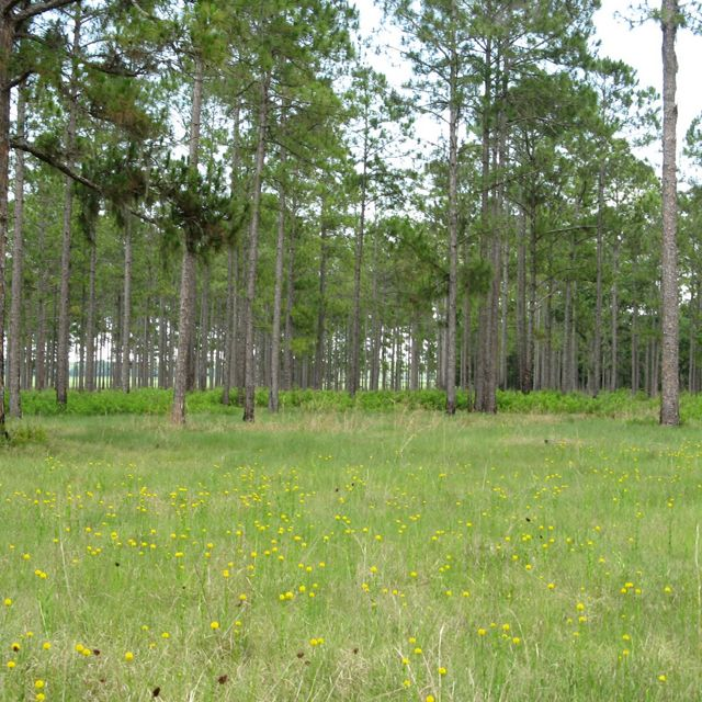 Rafter T Ranch in Central Florida