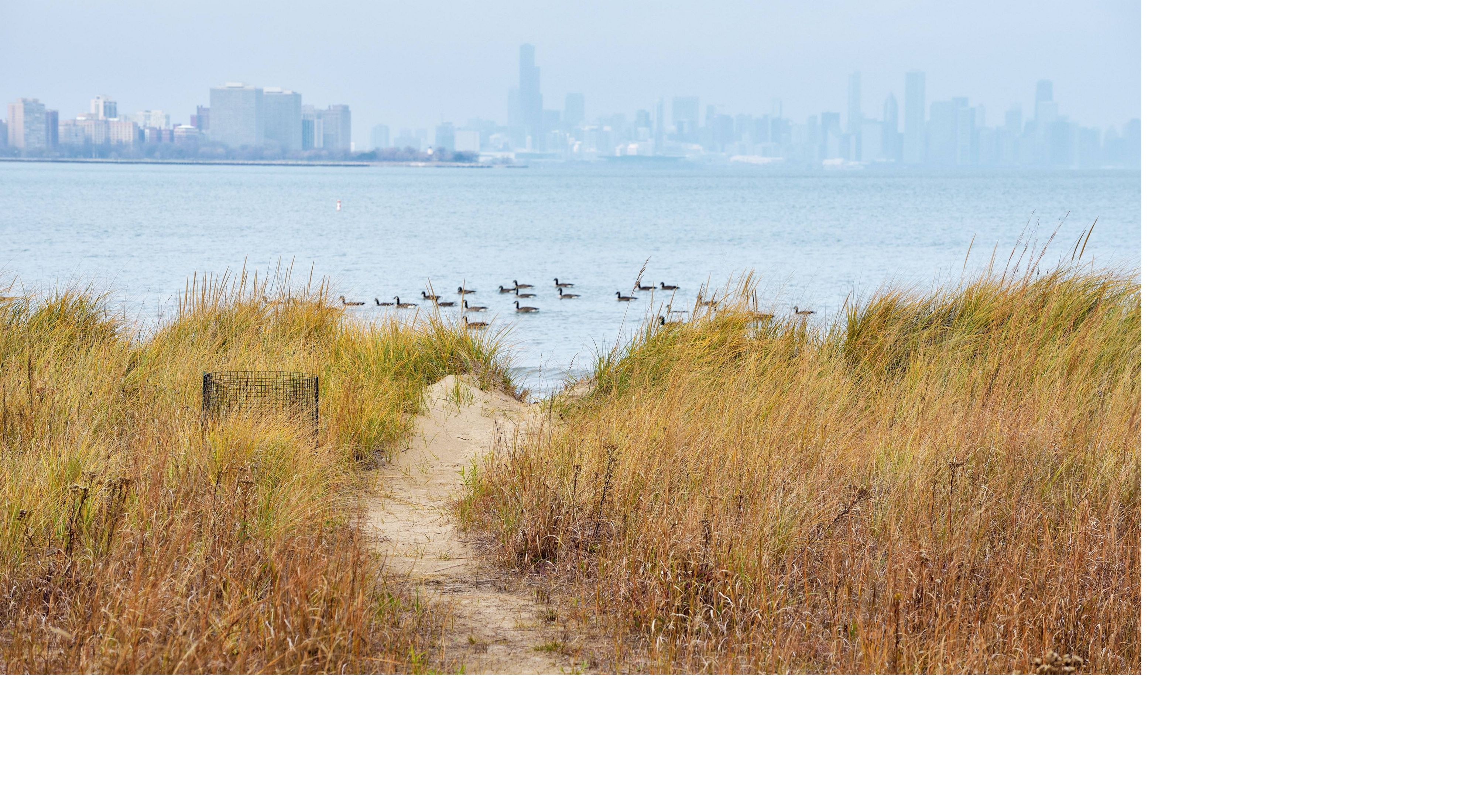 A pathway through a grassy area overlooking a body of water and the Chicago skyline at the Rainbow Beach Park Natural Area.