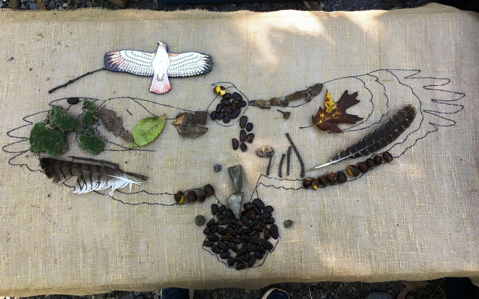 A collection of feathers, leaves, moss and other treasures.