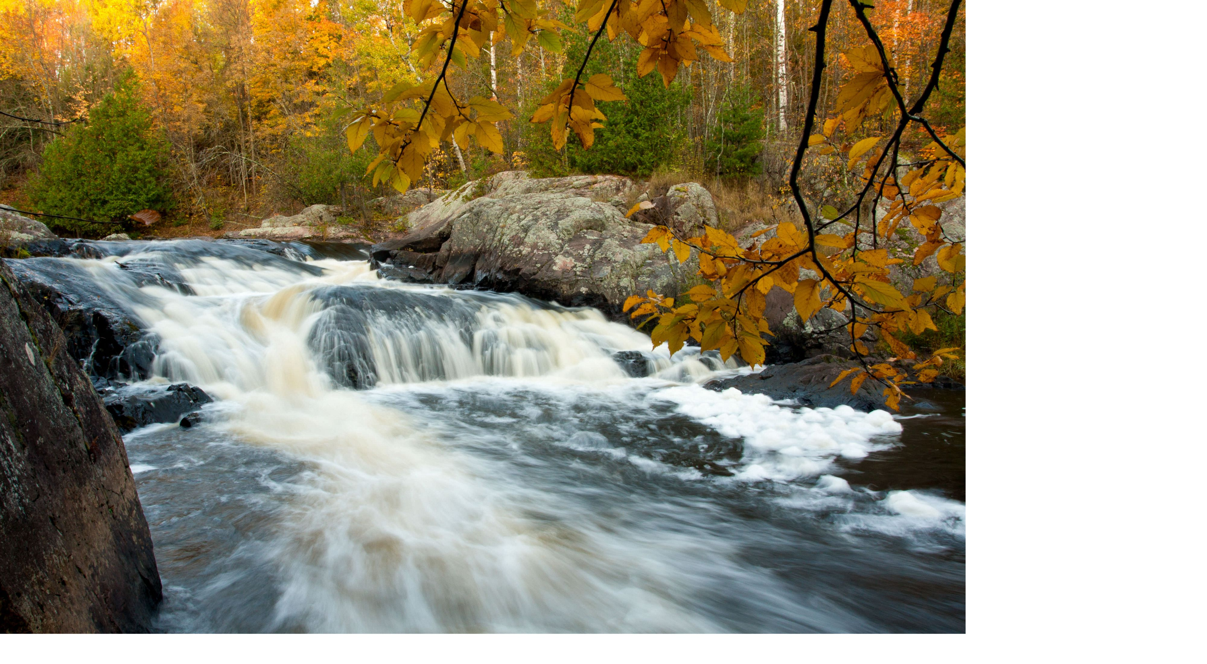 Water rushes over large boulders in a river lined by evergreens and trees yellow with fall color
