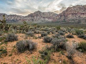 Red Rock Canyon National Conservation Area near Las Vegas, NV