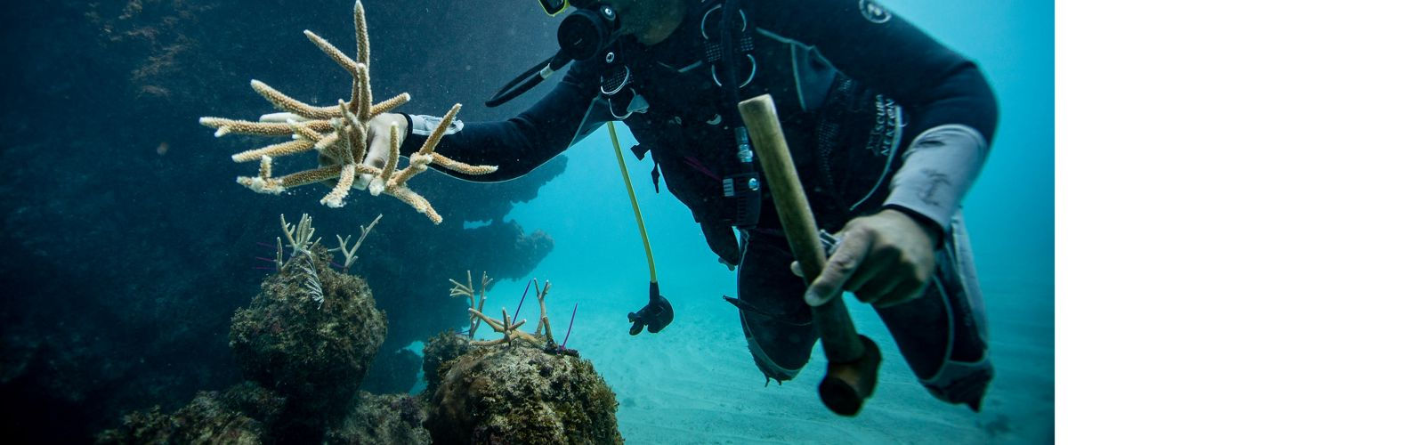 A diver repairs a coral reef in the Dominican Republic.