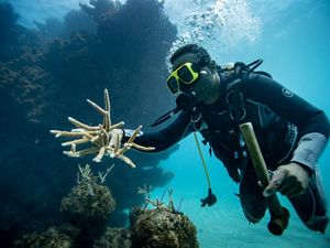 A diver swims to a coral reef, coral pieces and a hammer in hand