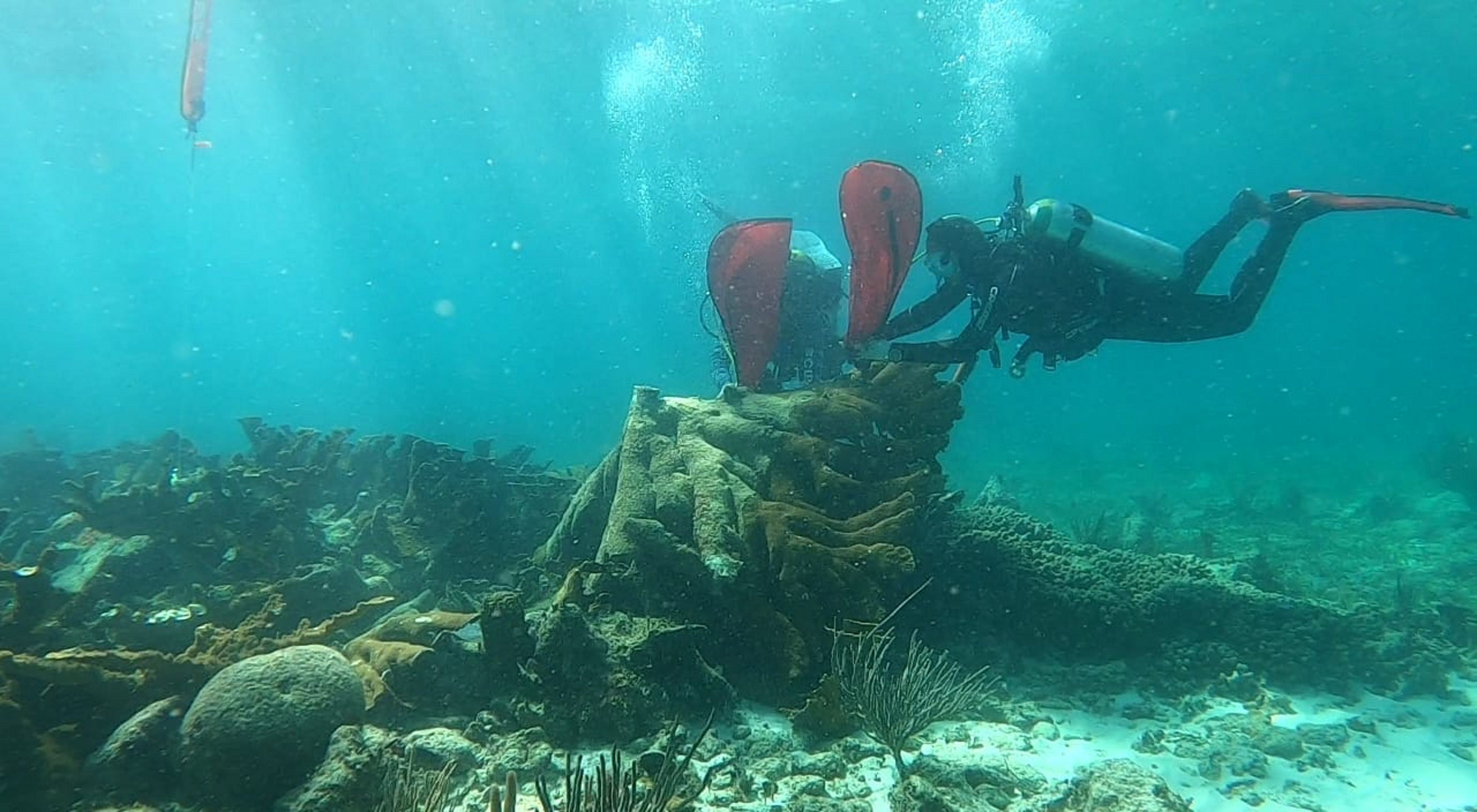 Divers restore a reef colony in Quintana Roo, Mexico
