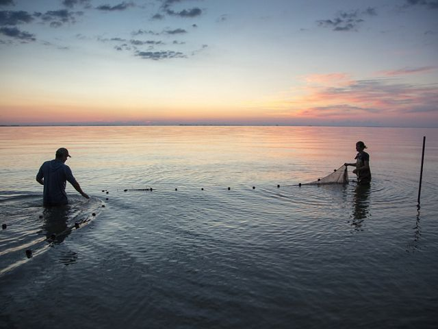 two men wade in water using fishing net