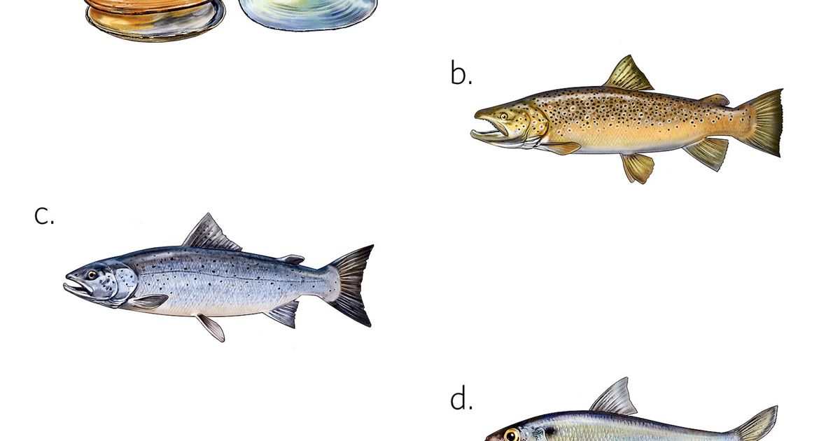 Color illustrations of fish and mussels