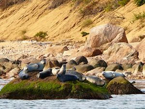 A group of seals perched on boulders on an ocean shore.
