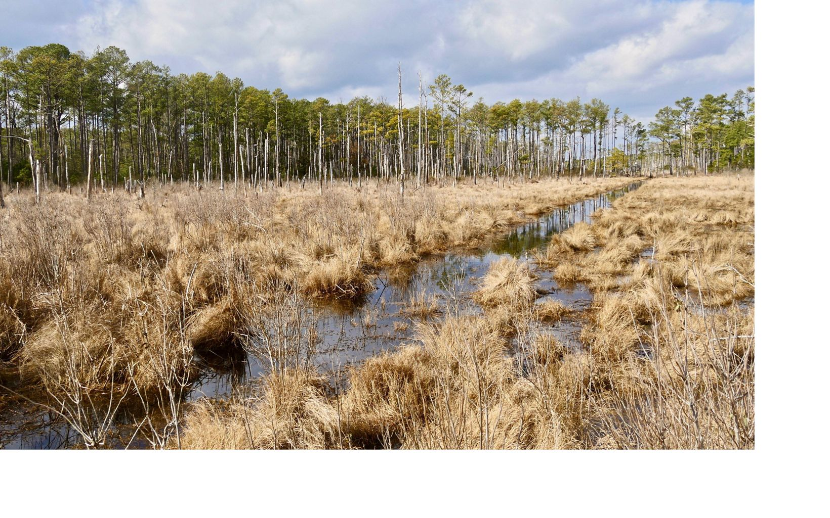 Located on on Maryland's Eastern Shore, Robinson Neck Preserve is largely comprised of brackish tidal marsh and provides a haven for many bird species.