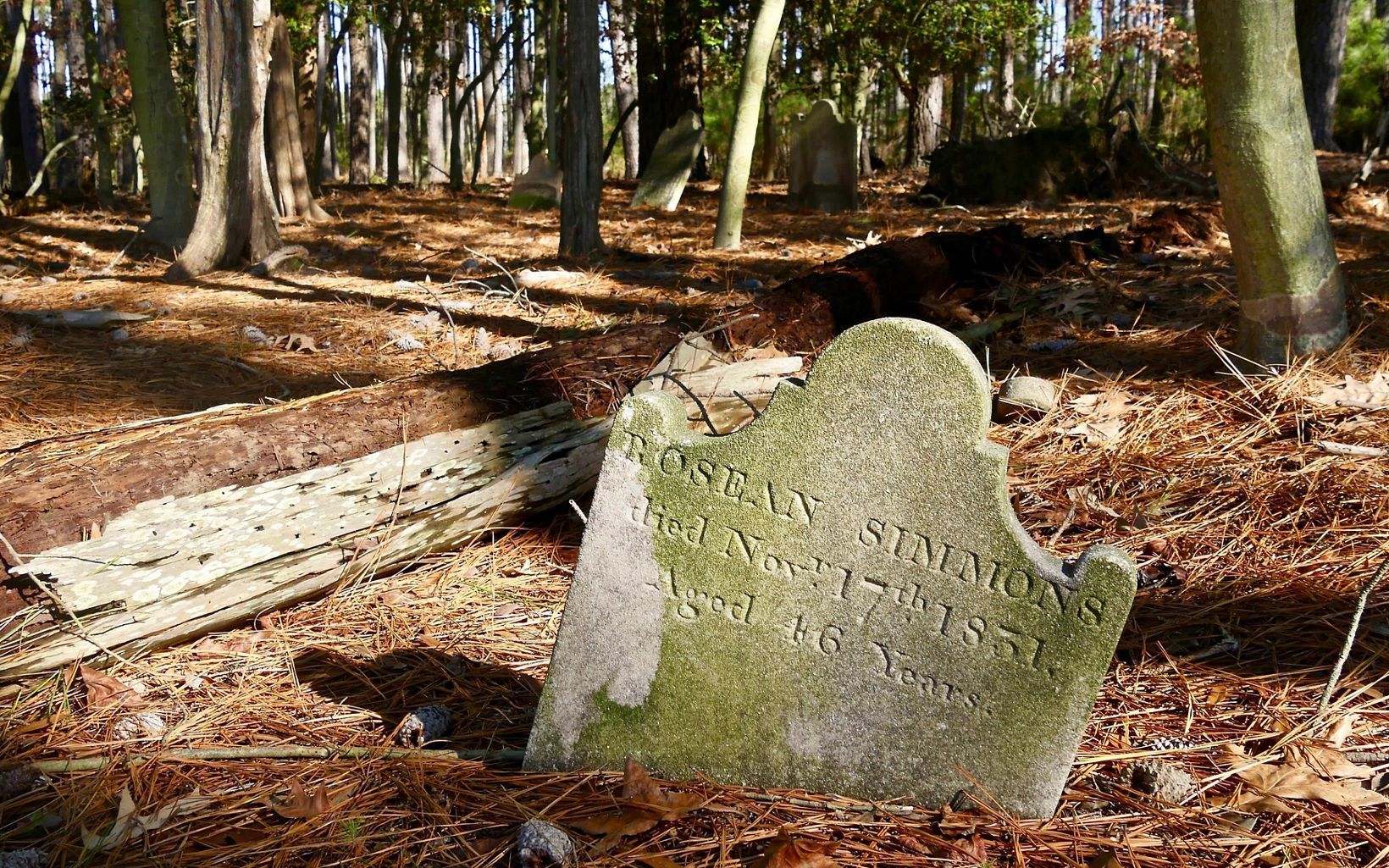 A long forgotten cemetery plot belonging to the Robson family was discovered on the Robinson Neck Preserve a number of years ago.