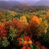 Fall foliage highlights a forested landscape.