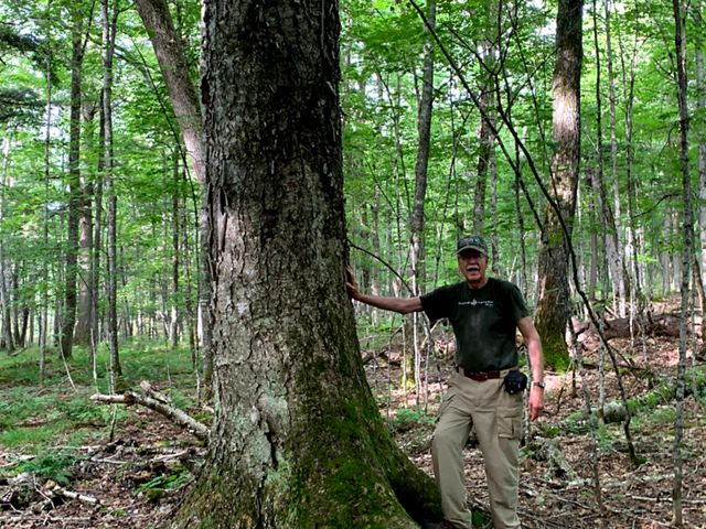 A man with a silver mustache and a TNC ballcap on leans one hand against a thick tree with a mossy trunk. A leafy green forest of trees spreads out behind him.