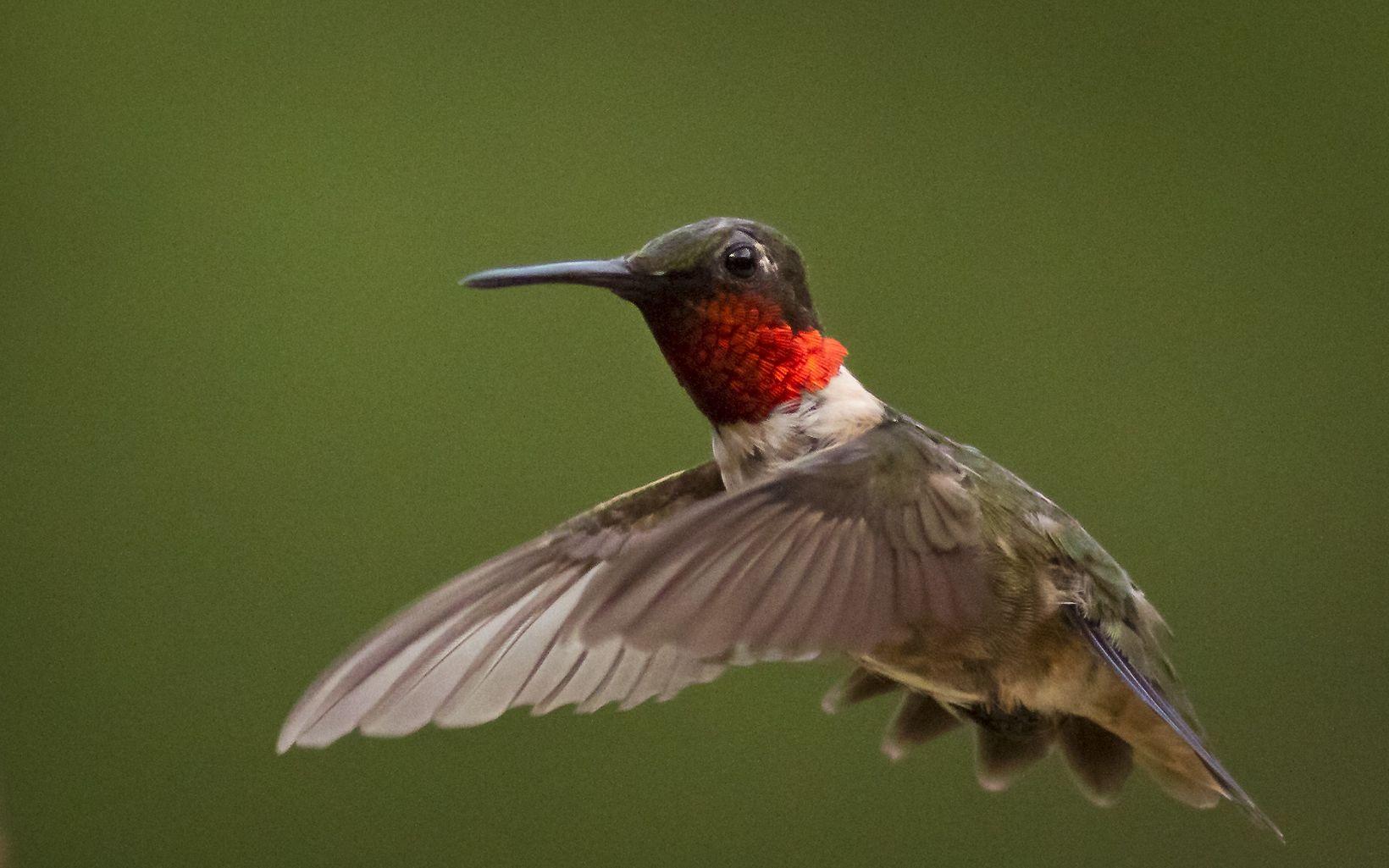 A small hummingbird in flight.
