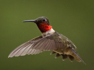 A colorful bird flies through the air.
