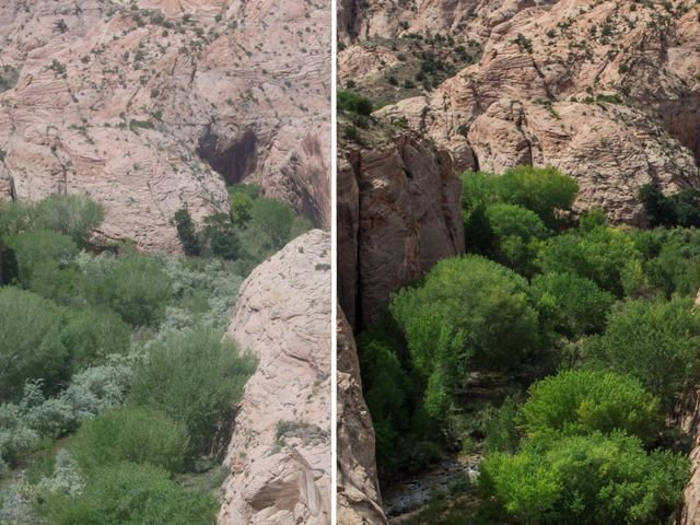 Photographs show the landscape before and after Russian olive removal at the Boulder Creek Confluence.