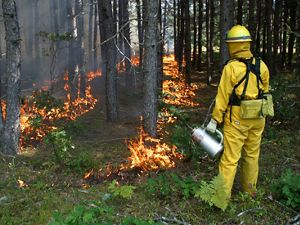 Prescribed fire helps to restore the globally rare Ossipee Pine Barrens Preserve in Ossipee, New Hampshire.