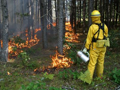 A person in yellow fire gear holds a drip torch, while carefully placed flames envelop the bases of neighboring trees.