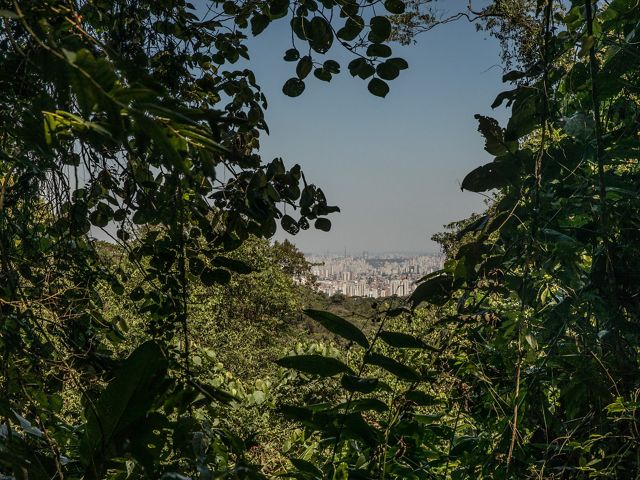 Cantareira State Park, São Paulo, Brazil: 09/22/2018: The park keeps parts of what is left of the Atlantic forest in the metropolitan region of São Paulo. From the high part, it is possible to observe the curtain of pollution that hangs over the city of São Paulo, one of the most populous in the world.
