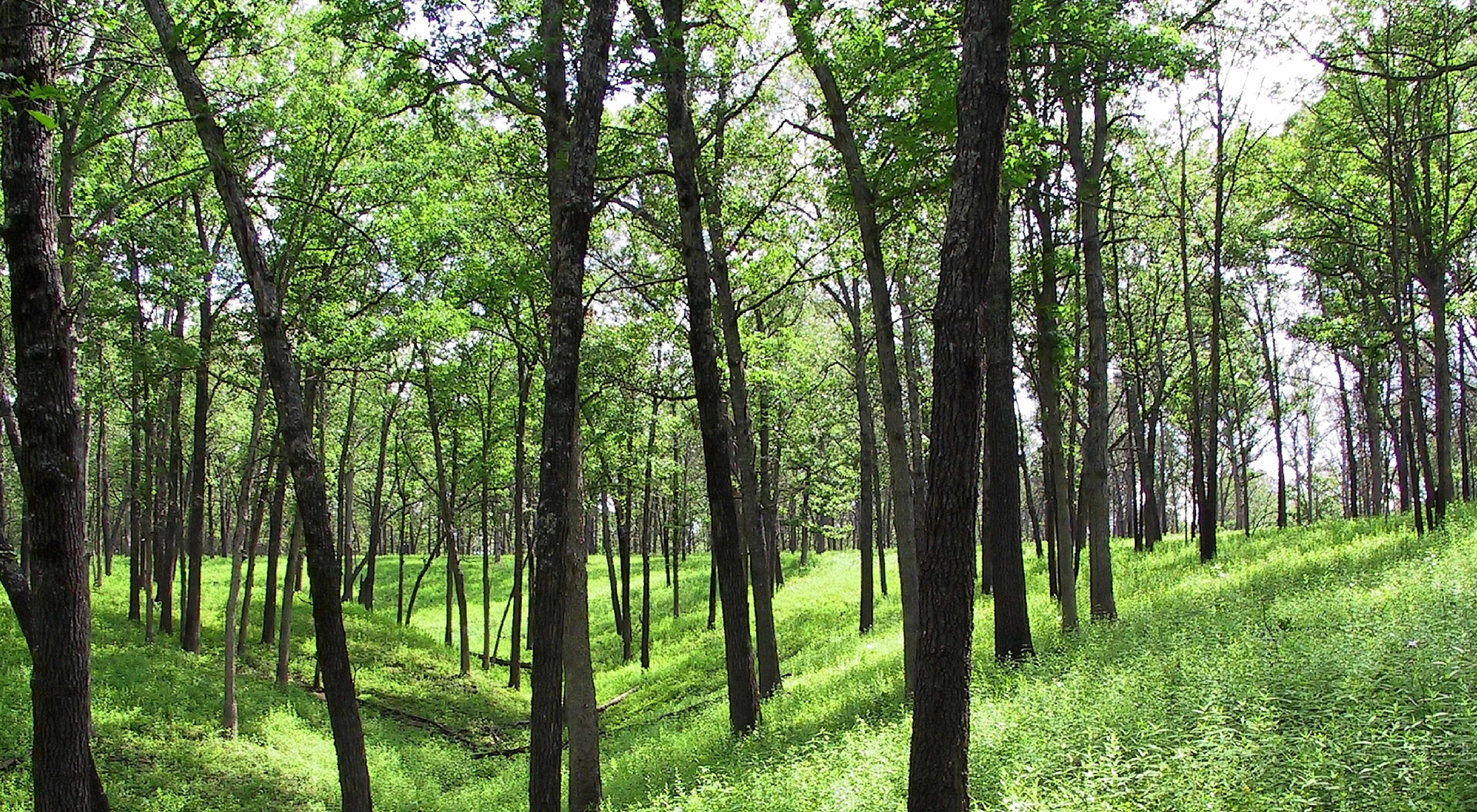 lightly forested area with bright green vegetation below