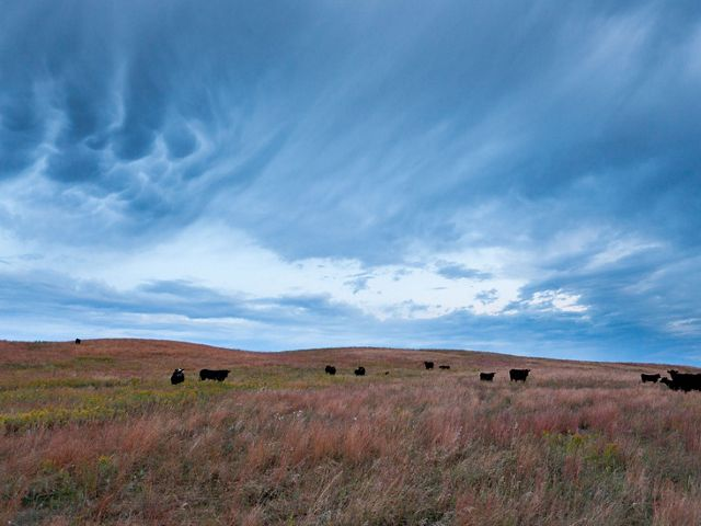 The Nature Conservancy's Bluebell Ranch in the Prairie Coteau region near Clear Lake, South Dakota.