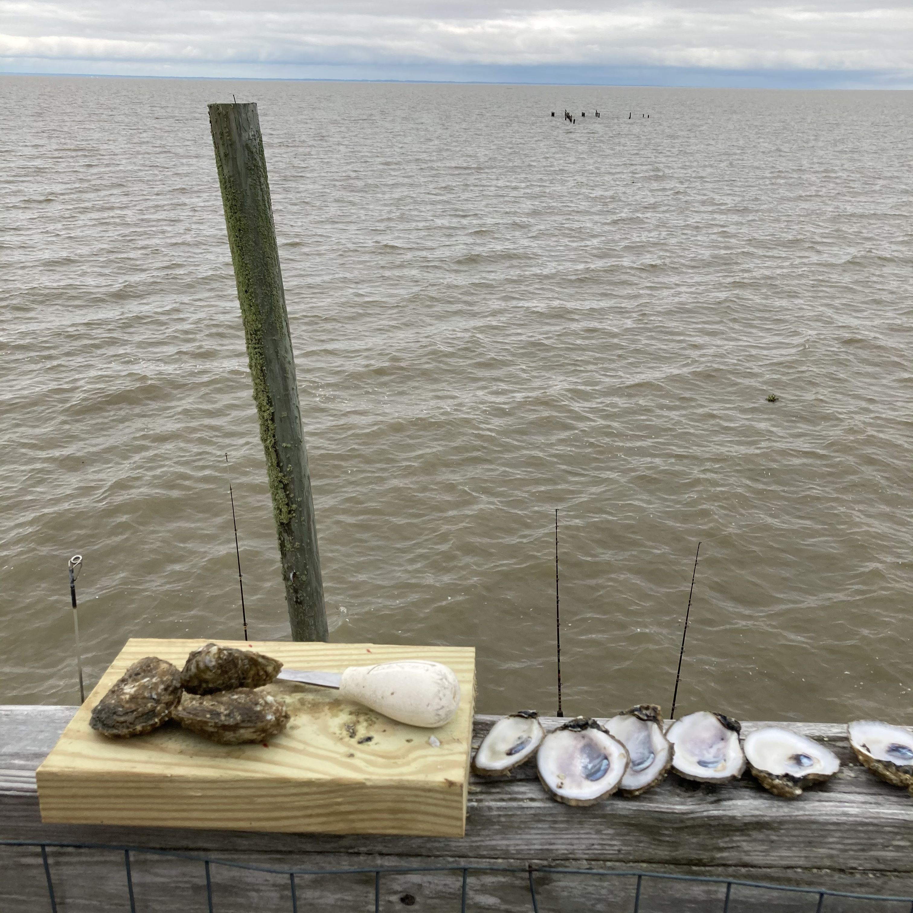 Whole and shucked oysters on a ledge overlooking the water.